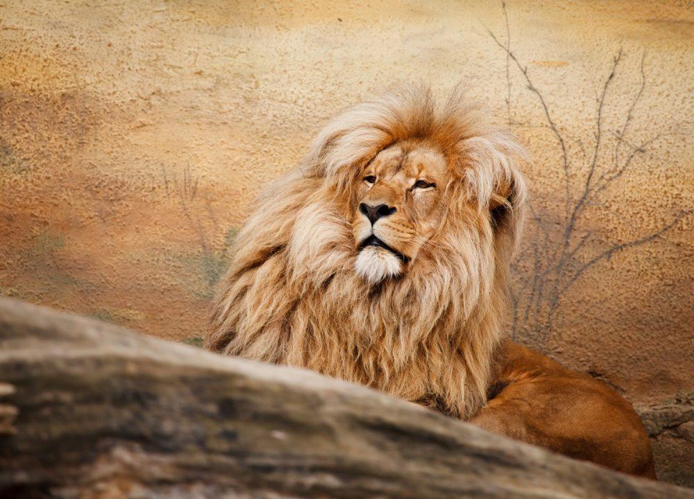 Africa – Amazing Africa Safari